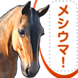 動物リアルイラストメッセージスタンプ