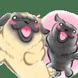 Pug's Life2 jp