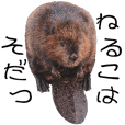 飯田市動物園公式スタンプねるこはそだつ編