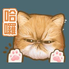 加菲咪膩醬-簡單生活用語篇