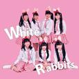 White Rabbits2020