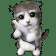 Cu Mofu Kitten3