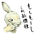 Wannabe famous rabbit