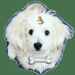 愛犬 メッセージ