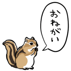 talking Squirrel