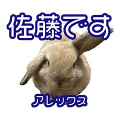 佐藤家のウサギたち