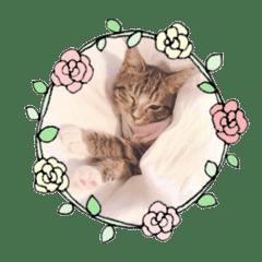 美國貓Britteny的成長日記 - 日常用語