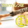 teamしっぽ①