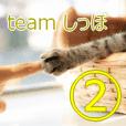 teamしっぽ②