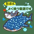 サメtoジンベエザメの敬語トーク