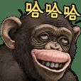 ลิงชิมแปนซี!