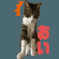 Cat's name is Mya