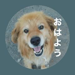 don dog2