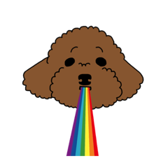 I have a BROWN TOY POODLE