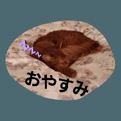 Somakun_20200609135638