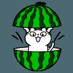 White cat Porin 8 summer version