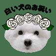 白い犬のお祝い