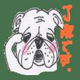 Bulldog francés 2