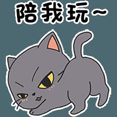 Super cute little grey cat