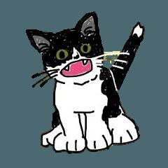 Hachiware kitten NON