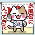 "Cute cats ""Nyanko-san"" --Move! part2--"
