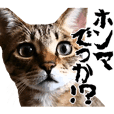 にゃんこ・デカ文字・関西弁2