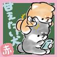 甘えたい犬<赤柴>