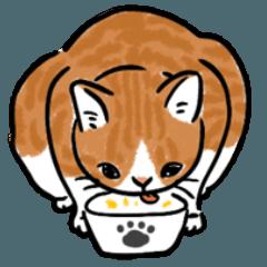 Fat orange cat is fat -Yycat