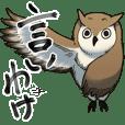 Excuse owl