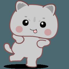 British Short Hair Cat : Grey