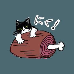 hachiware kitten NON 2