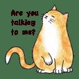 Jaffa Cat