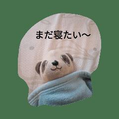 パンダのまいにち