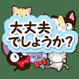 6 cute cats! (Polite version)
