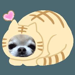 yukki_20200620174630