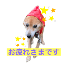 Shuu3_20200621044325