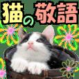 Amusing cat 8