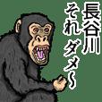 Sticker of Hasegawa