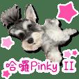 Hello pinky 2