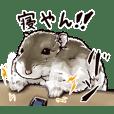 hamster ginji2