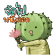 bubie cactus