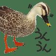 リアルな羊毛フェルトの野鳥たち2