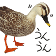Realistic needle-felted wild birds 2