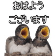 Big stickers of Japanese wild birds