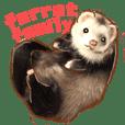 ferret family
