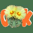 สนทนาภาษาดอกไม้ (กระบองเพชร แคคตัส)