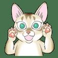 LOVE YOUR SINGAPURA! STICKER 4 CAT LOVER