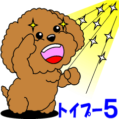 Positive and negative Toy Poodle