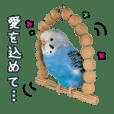 セキセイインコ (ブルー) 2  敬語