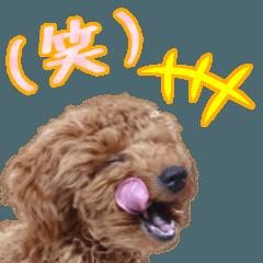 Toypoodles so cute sticker